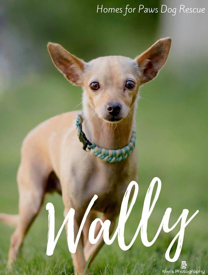 Wally - Available!