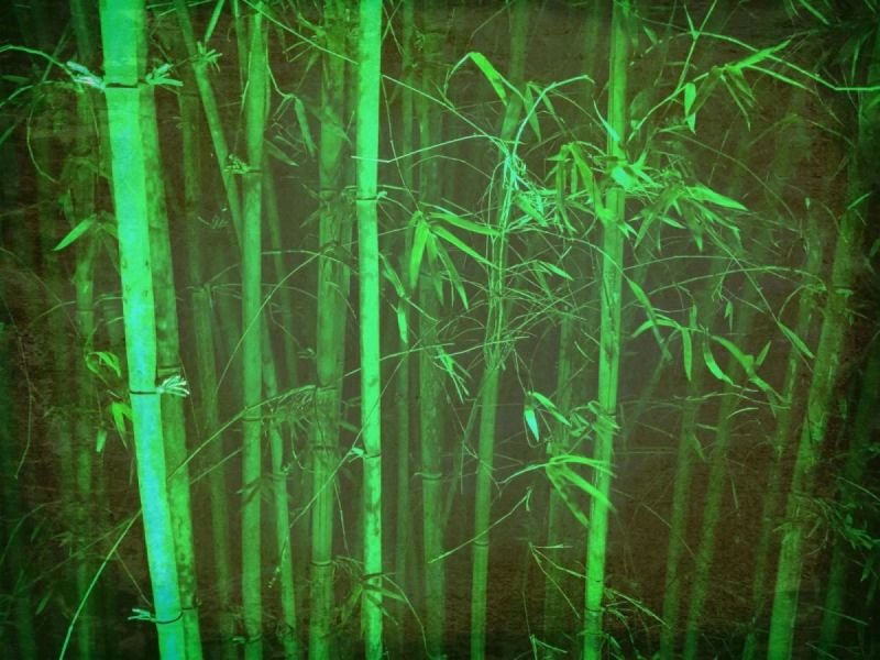 Bamboo can Save the Planet
