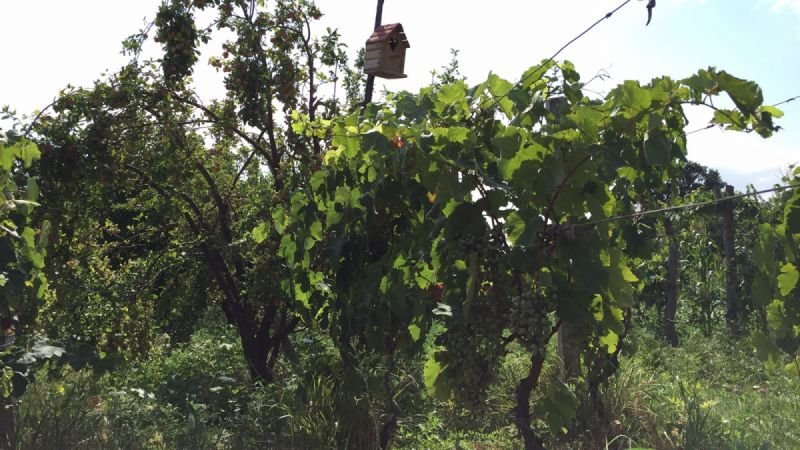 We treat environment and welcome birds and pests in our vineyard