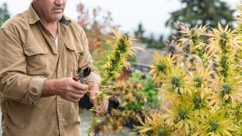 Top Tips for Starting a Career in the Cannabis Industry