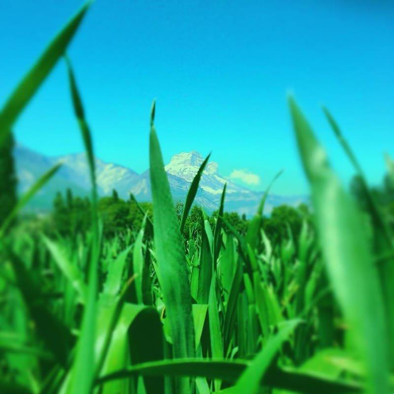 écrin naturel #16 des brins d'herbe dans les dents / Chartreuse