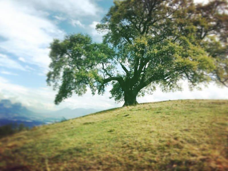 auprès de mon arbre #5