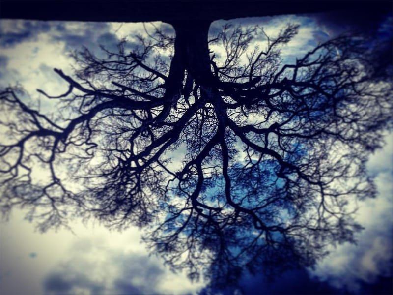 auprès de mon arbre #6