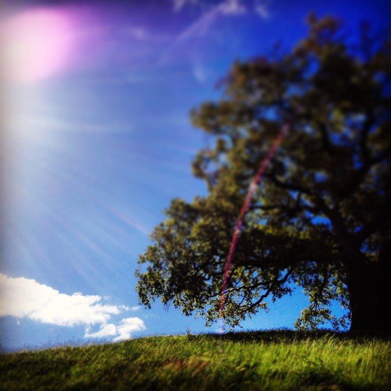 auprès de mon arbre #1