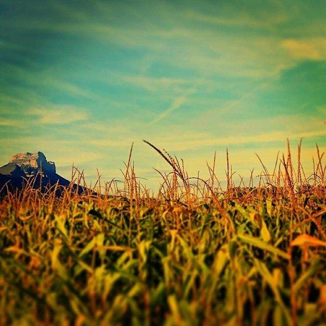 écrin naturel #7 aux couleurs de l'été indien / Chartreuse