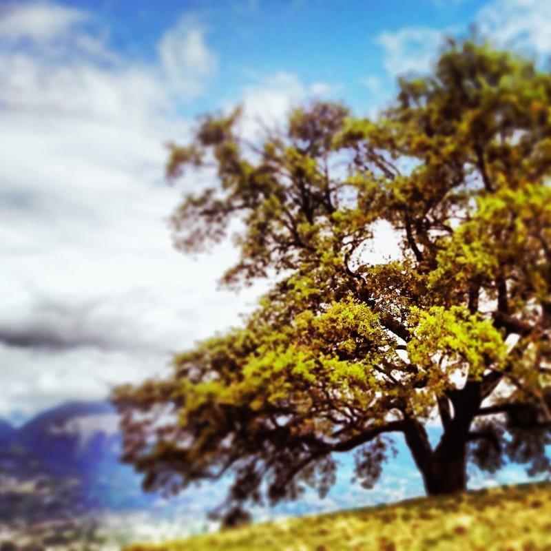 auprès de mon arbre #19