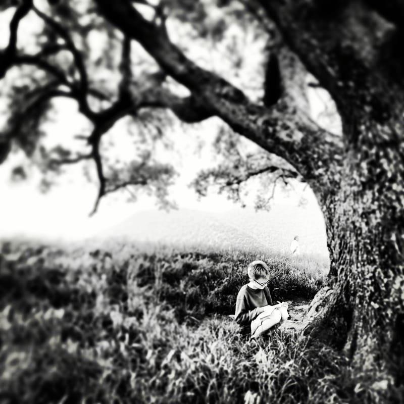 un chêne dans le ciel... #3