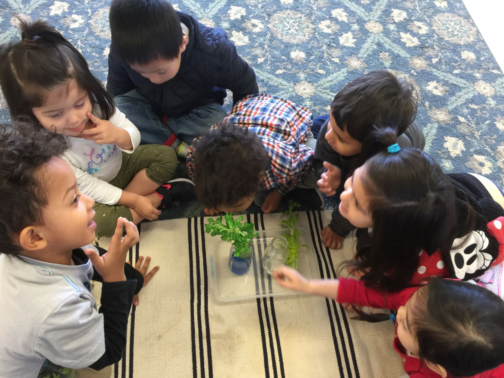 montessori in garden grove