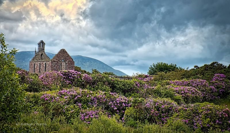 Ruined church amongst the rhododendrons