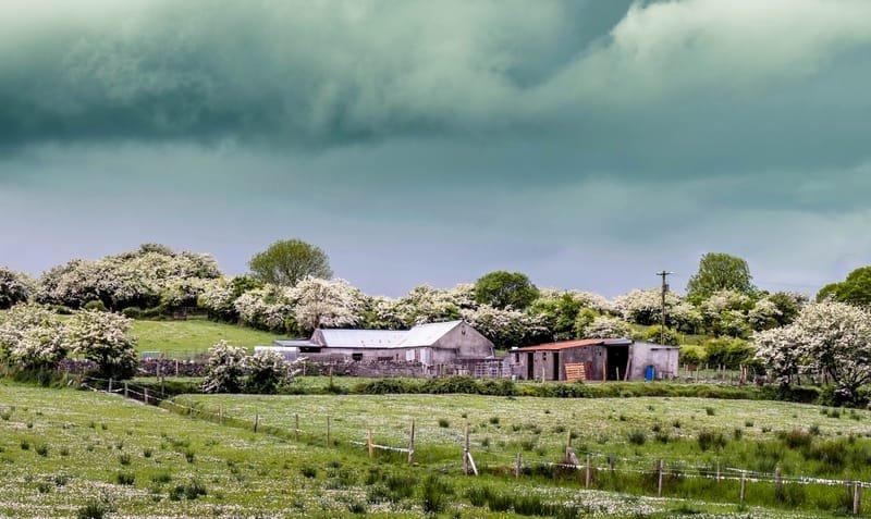 Hawthorn blossom 2017
