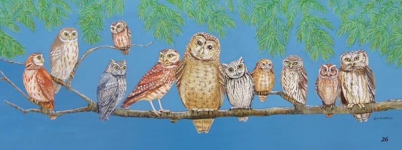 Owl Talk Full