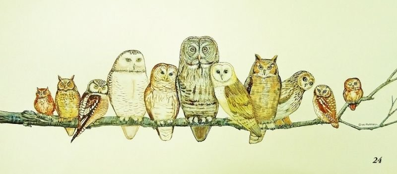Owl Watch on off white background (digital only)