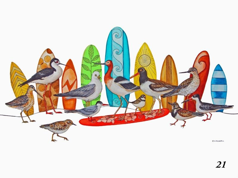 SurfBirds with no Text