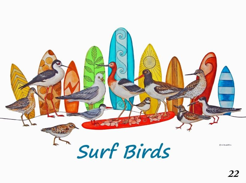 SurfBirds with Text