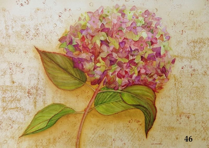 Love Letters Mauve Hydrangea