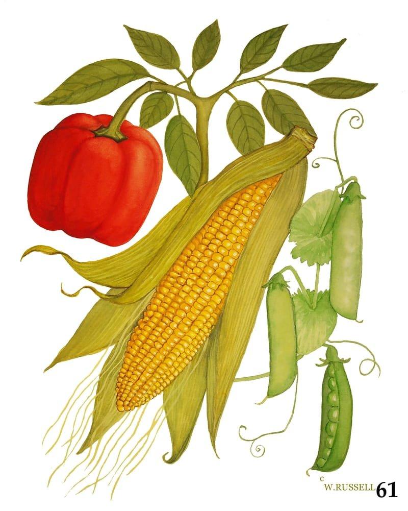 Vegetable Trios Series Corn