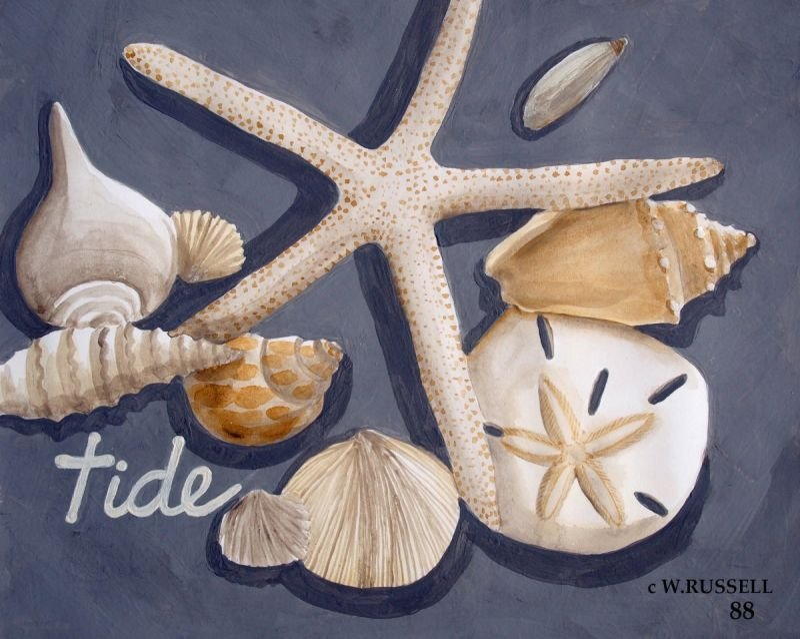 Seashells on Grey Series Tide