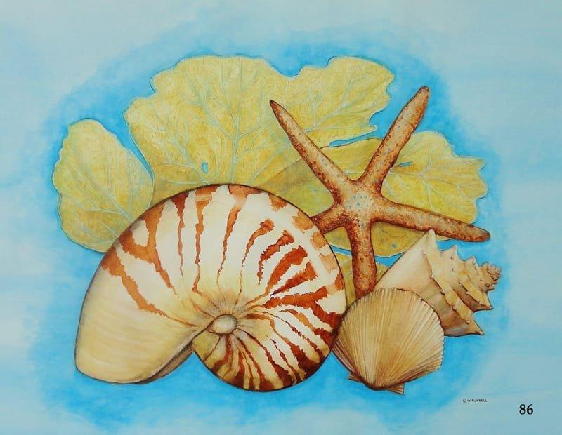 Seashells and Seafan with Nautilus