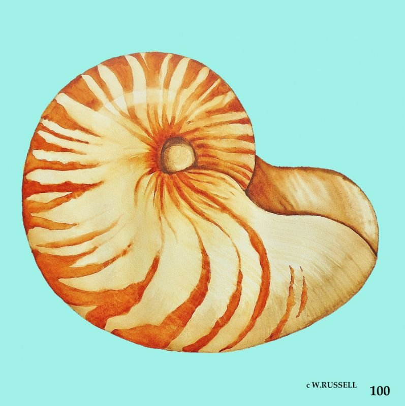 Nautilus Shell with aqua colored background (digital only)