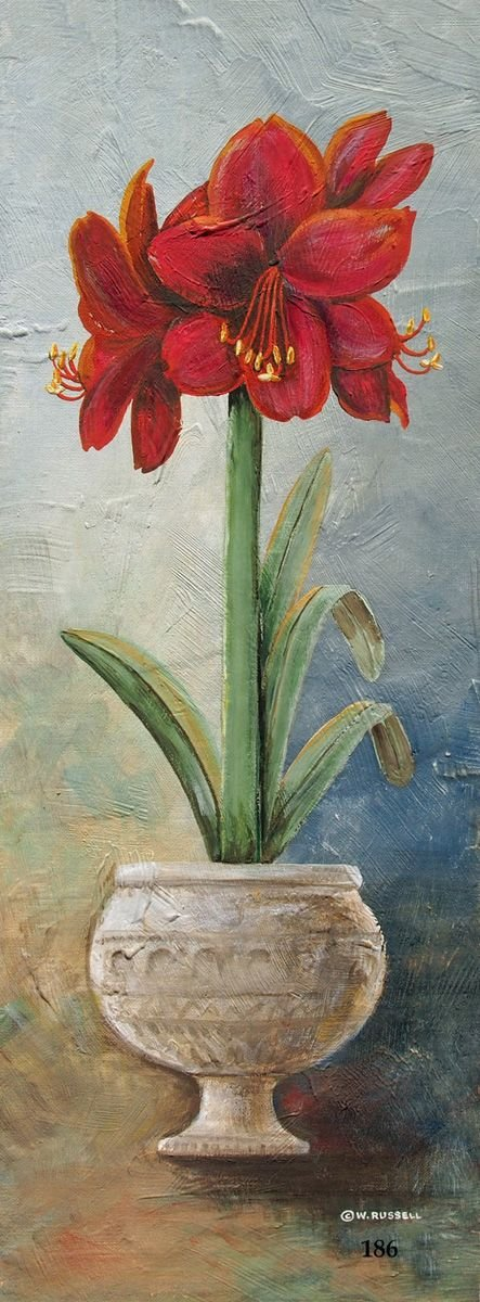 Vertical Potted Amaryllis