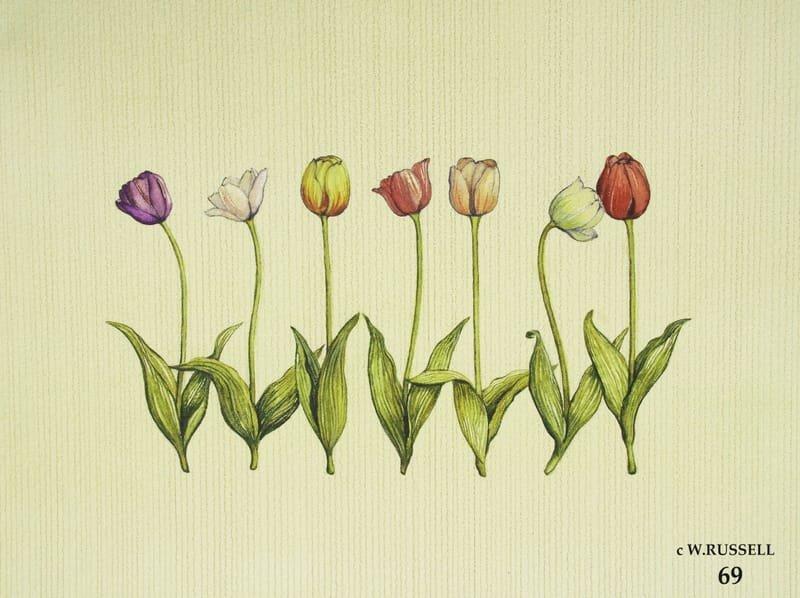 Row of Tulip Flowers