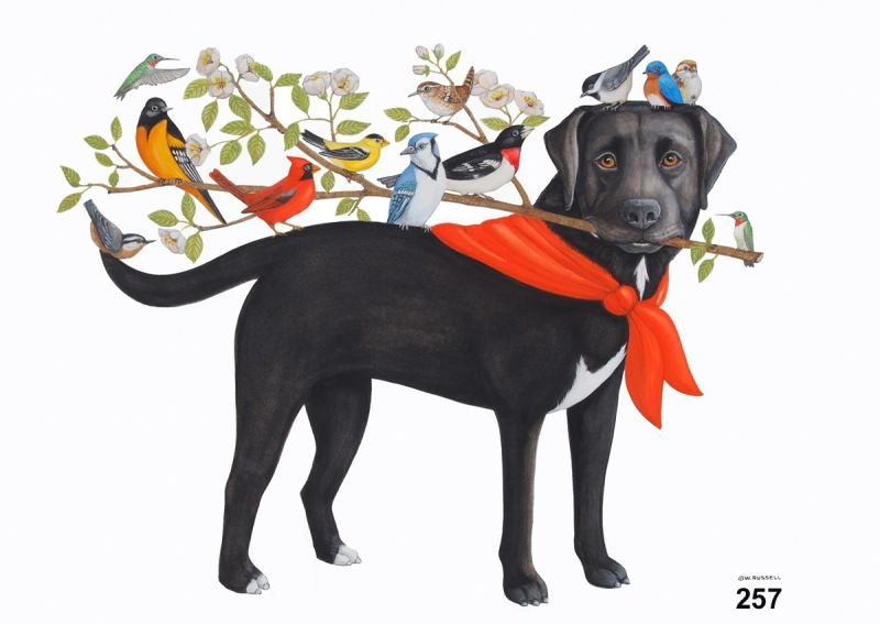 Bird Dog Branches Out