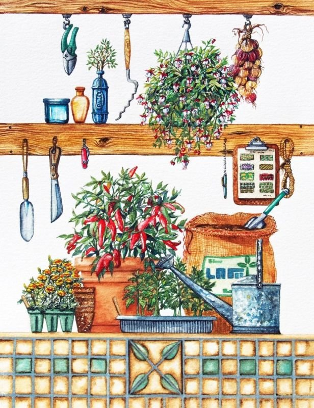 Garden Shed Series Pepper Plant