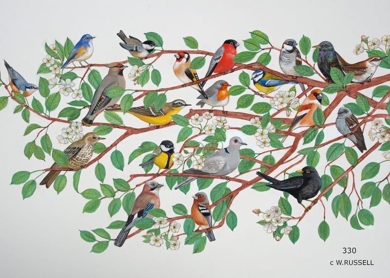 British Garden Birds Detail 2