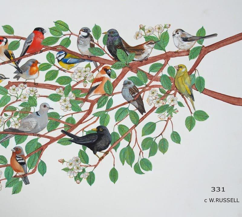 British Garden Birds Detail 3