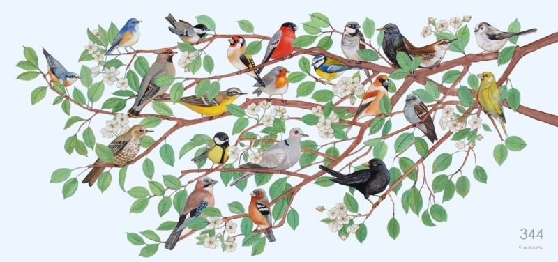 Birds of Great Britain with Background