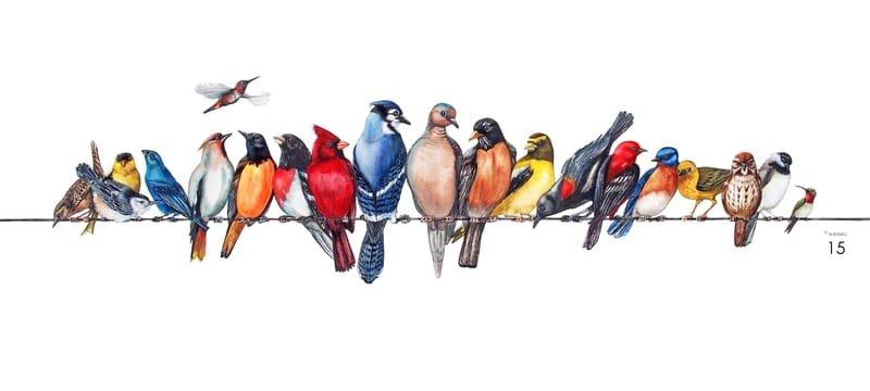 Chorus Line backyard birds