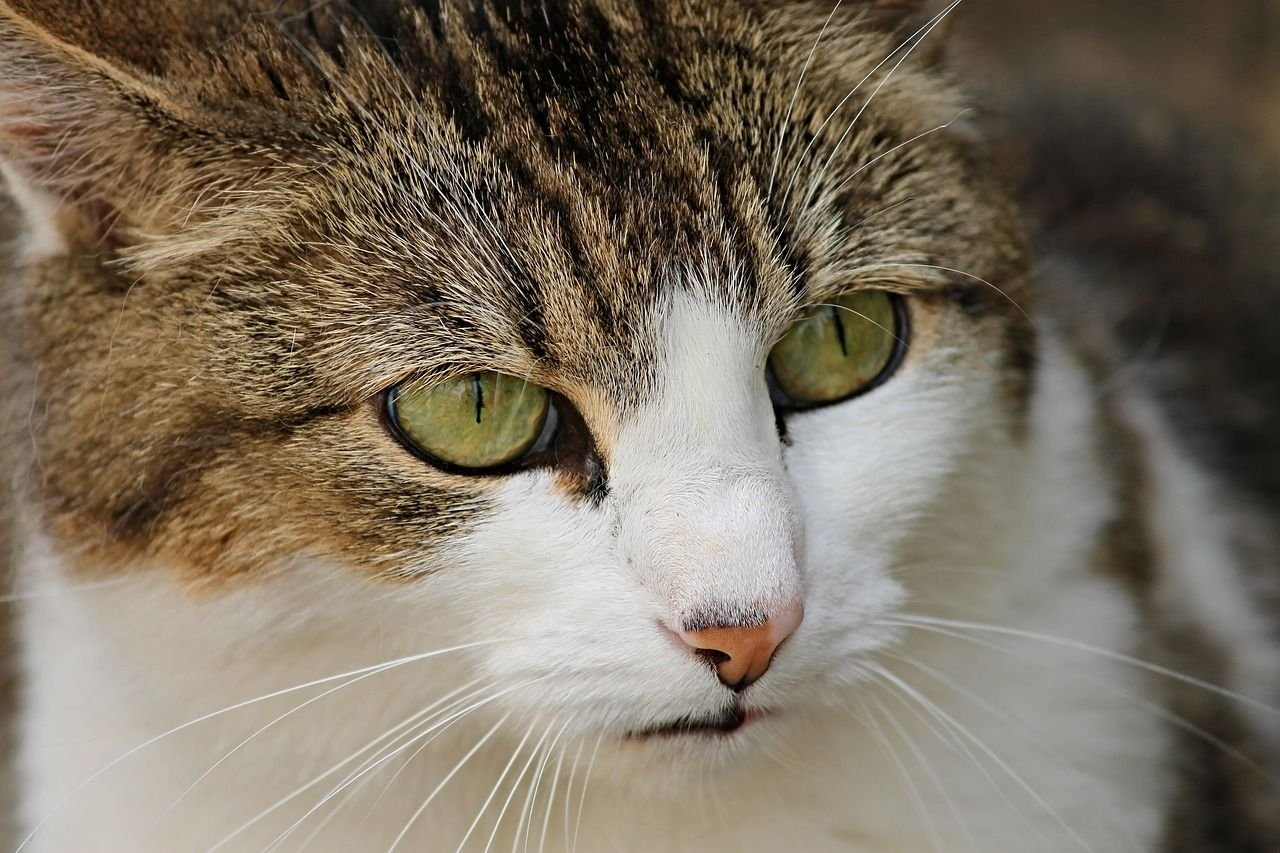 Why Cats Pee Outside Their Litter Box