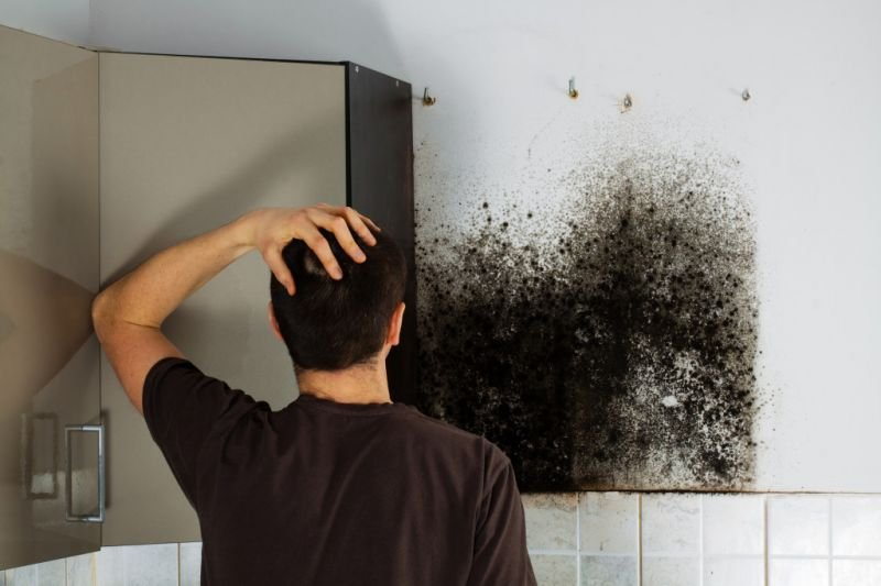 Understanding the Very Specifics that Needed Considered to Effectively Find the Best Black Mold Remo