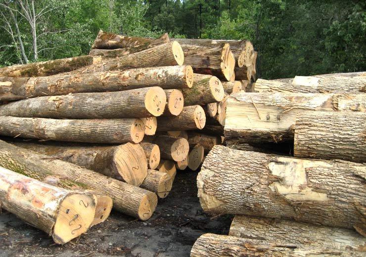 Ash Logs