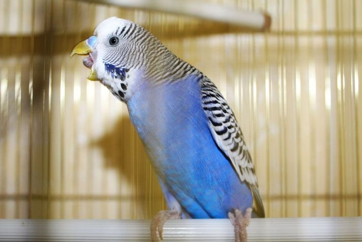 Some Of The Popular Bird Types For Keeping As Pets In The Home