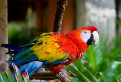Important Things You Should Consider When Choosing A Parrot As A Pet