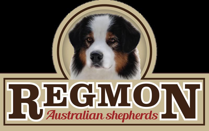 לוגו רגמון רועים אוסטרלים
