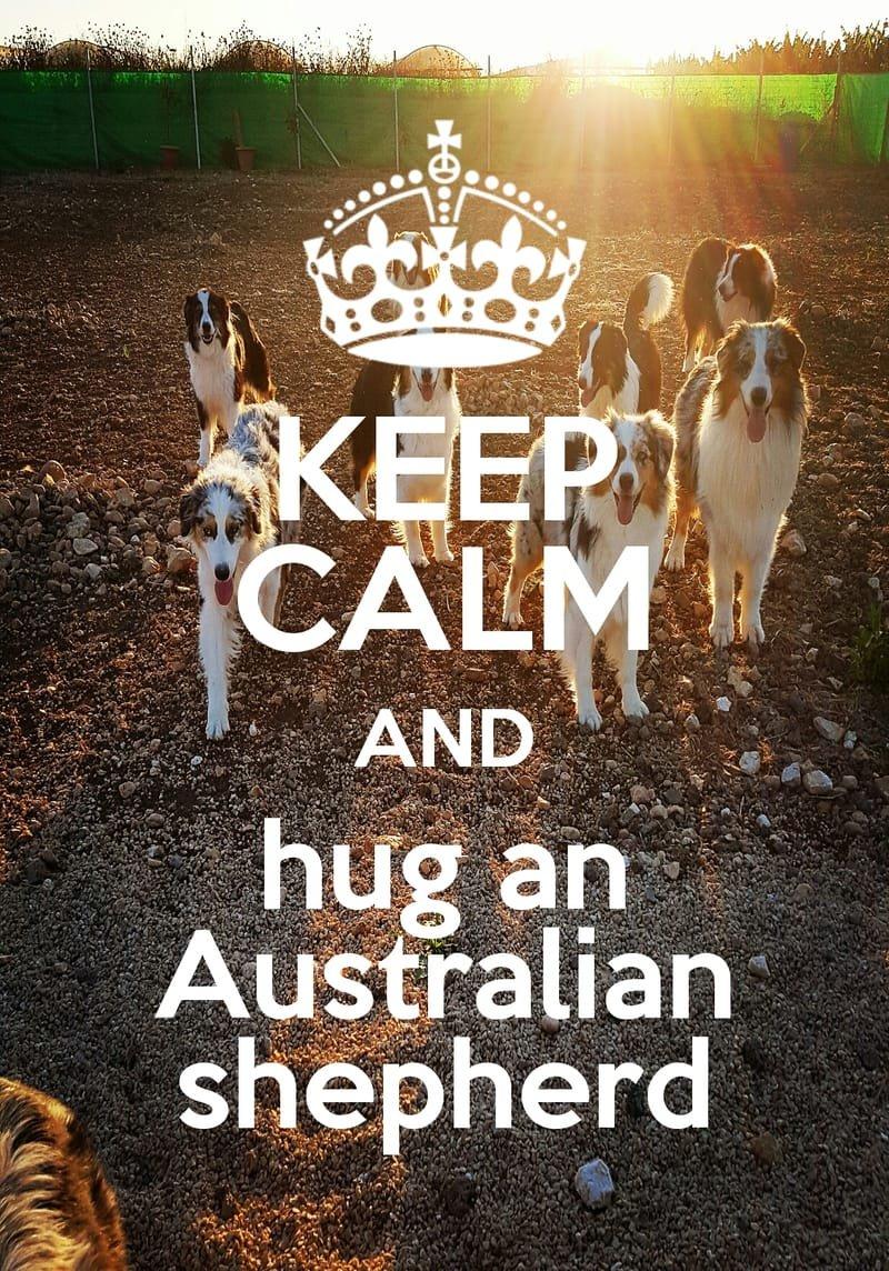 keep calm and hug an Australian shepherd