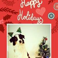 Regmon happy holidays