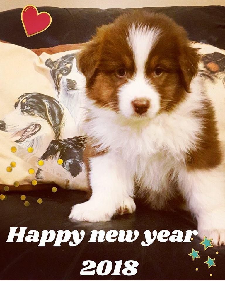 בייבי בריטני מאחלת שנה טובה