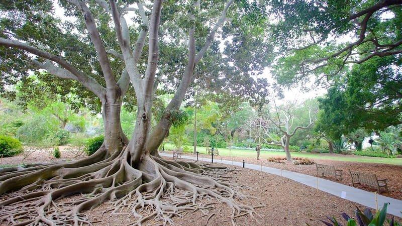 Genial Marie Selby Botanical Gardens
