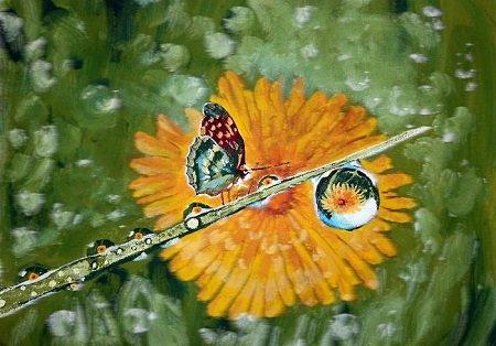 butterfly- פרפר