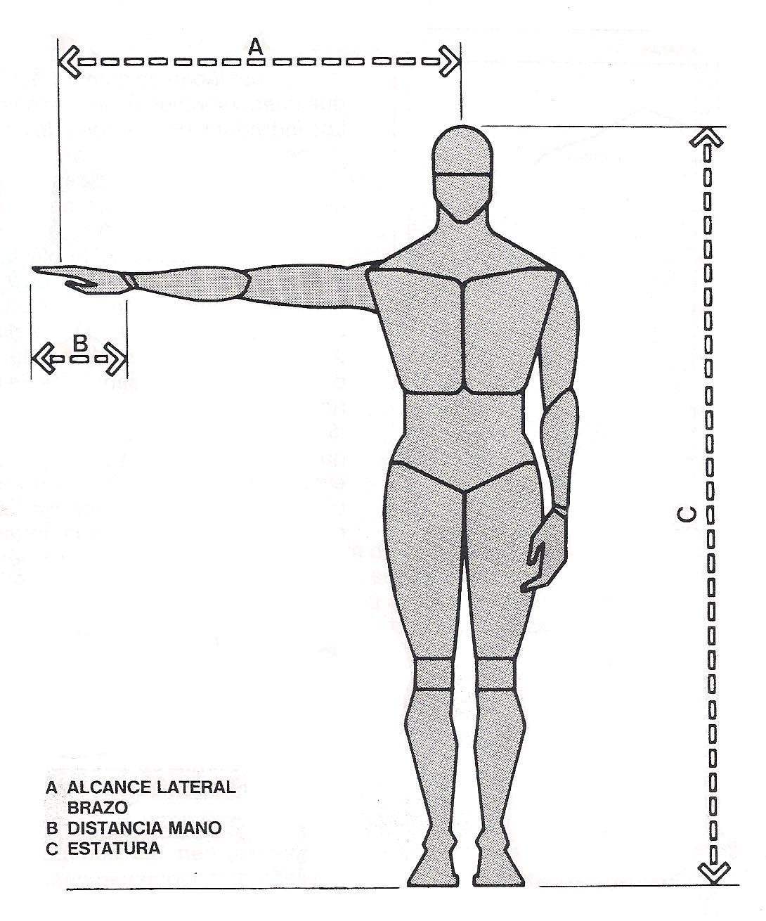 Funcionalidad del Cuerpo Humano - BrÄnz
