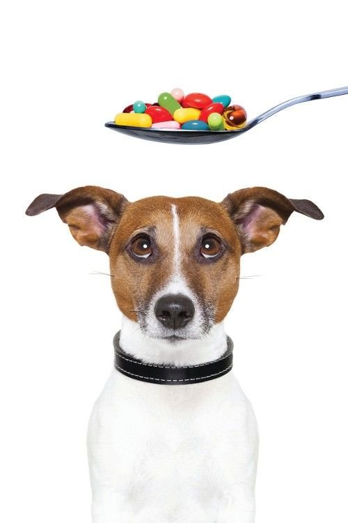 The Easy Guide to Choosing the Best Nutritional Supplements for Your Pets