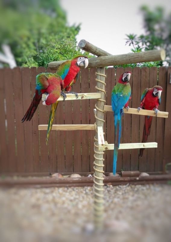 Home of Jubilee Macaw
