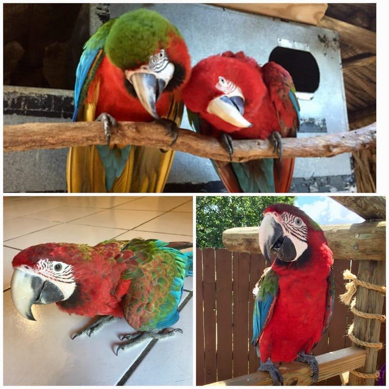 Home of Jubilee Macaw