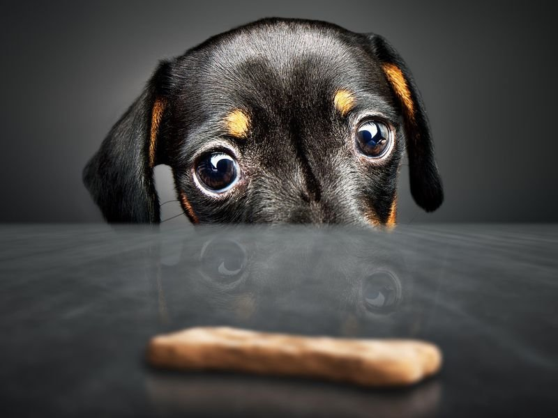 Considerations You Should Make to See to it That You Have the Right Dog Treat