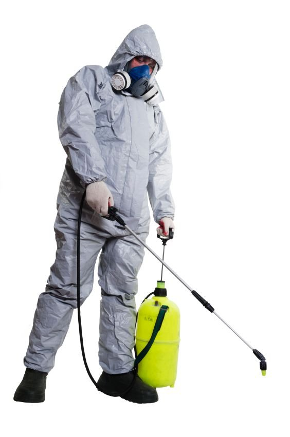 Choosing the Right Pest Control Provider