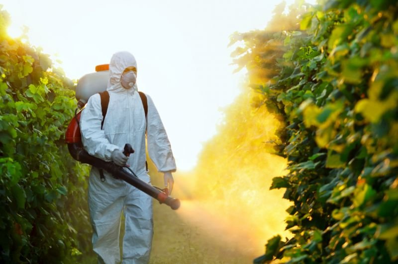 Pest Control Services: The Benefits