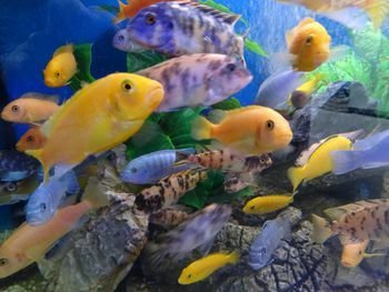 Tips for Choosing the Best Fish Tank